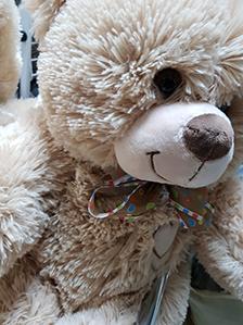 Купить медведя недорого, от 390 рублей | LaNord.ru